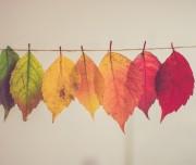 Autumn leaves by chris-lawton