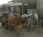 Khempur2