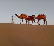Desert-of-Rajasthan001