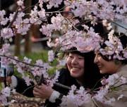 Blossom-003
