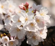 Blossom-004