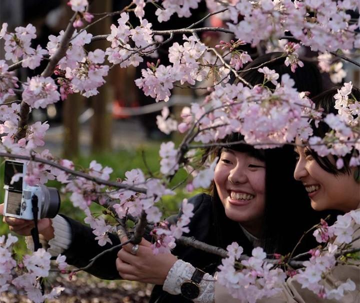 Blossom-Japan